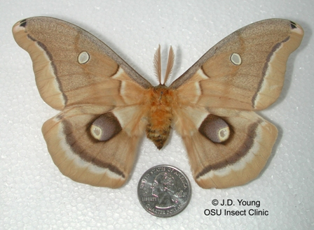 Osu Insect Id Clinic