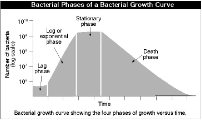Bacterial Growth  Subsection On Logistic Map